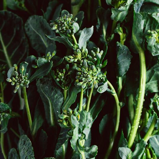 Krautkopf: Vegetarisch kochen und genießen