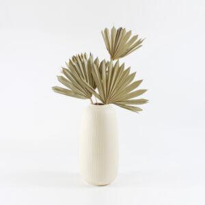 Palmenblatt Groß Natur